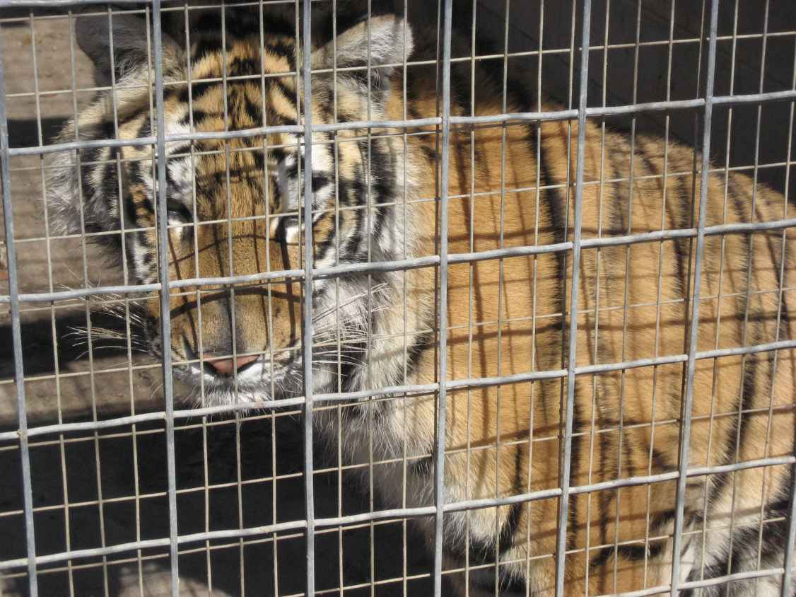 do we need zoos article