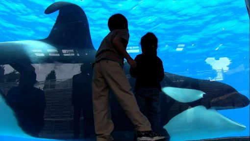 tilikum-in-a-scene-from-blackfish-a-magnolia-pictures-release