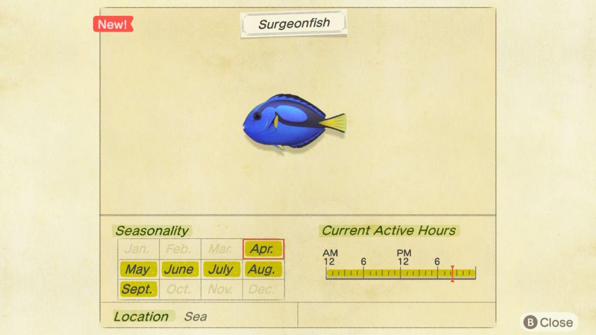 Surgeonfish New Horizons