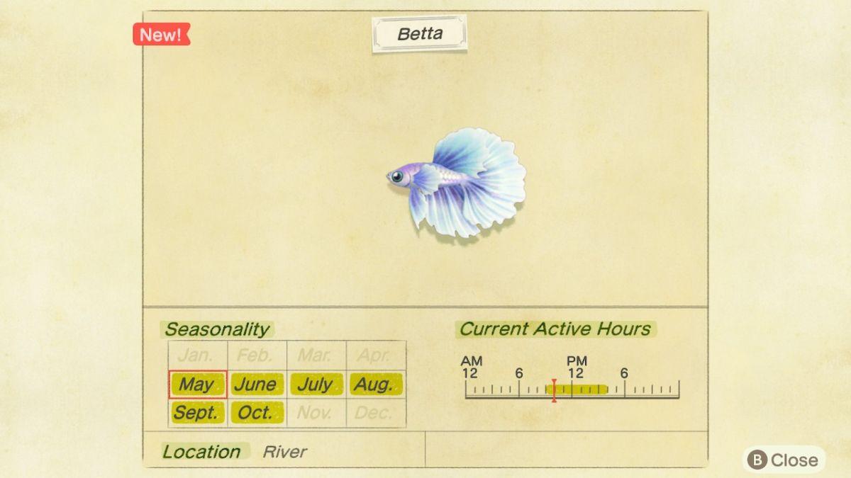 Betta New Horizons