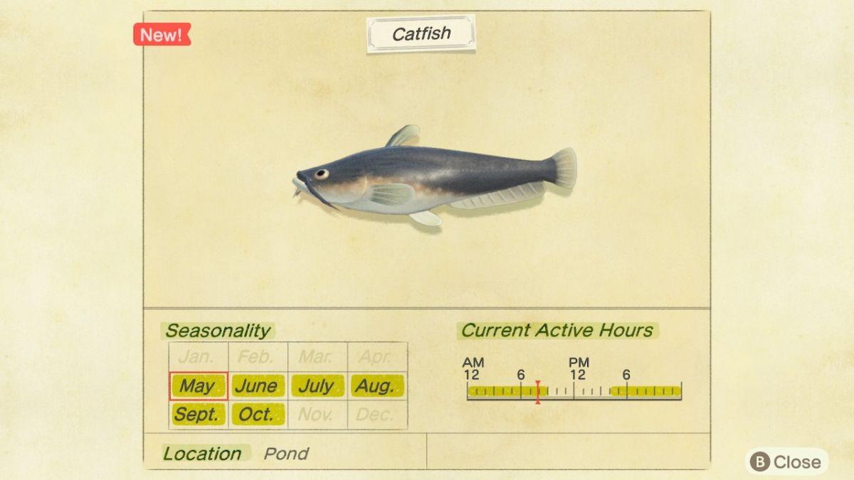 Catfish New Horizons