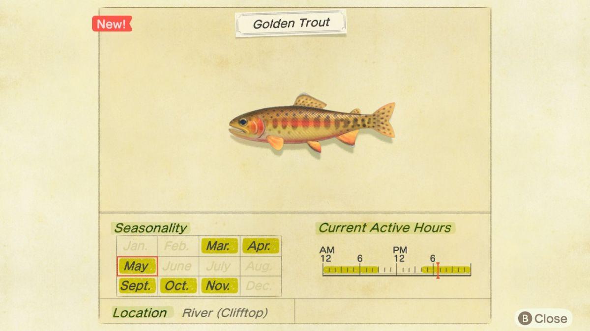Golden Trout New Horizons 1