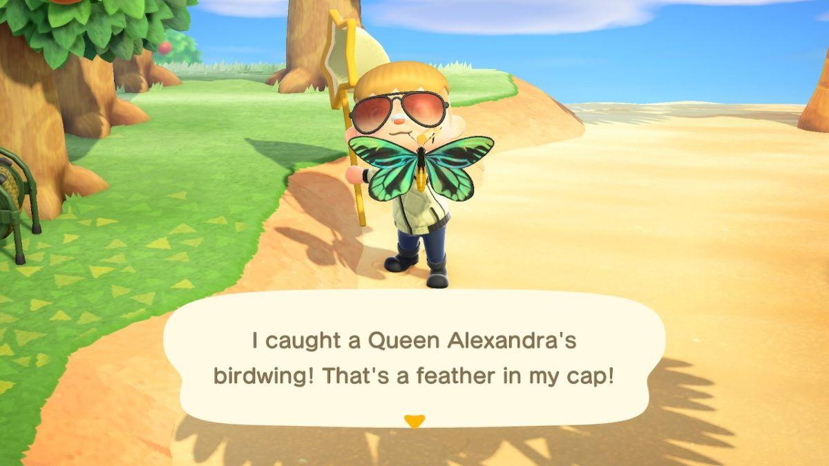 Queen Alexandra's Birdwing 1